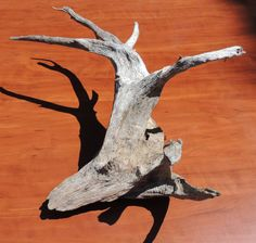 Many Pronged Driftwood Piece by TheDriftwoodDrifter on Etsy, $14.50