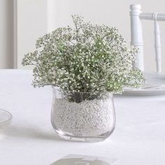 lindo vaso simples