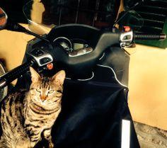 Motorcyclist cat