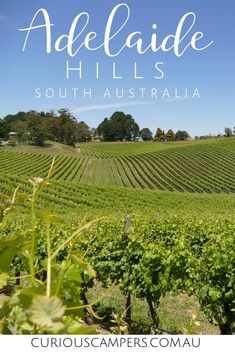 There are all kinds of things to do in the Adelaide Hills. Walks, wildlife, and family fun. Check out our top 25 activities and head for the Hills! Visit Australia, South Australia, Australia Travel, Western Australia, Stuff To Do, Things To Do, Melbourne Travel, Wildlife Park, Adventure Activities