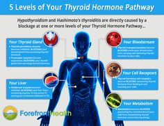 thyroid-hormone-pathway-infographic