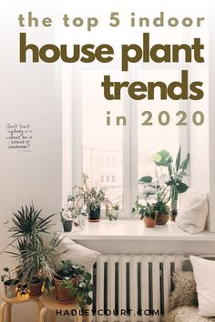 Ready to bring the outdoors in, or just liven up your home with low maintenance house plants? Explore the boho chic tropical house plant trend. House plants will never go out of style, but tropical house plants in particular are having a moment and oh so trendy. If you don't want a high maintenance fiddle leaf fig or a monstera but still want a lovely house plant, green, pink, yellow and more, tap to read this blog post. 5 Indoor Houseplant Trends for 2020 | Hadley Court - Interior Design… Decorating Your Home, Interior Decorating, Decorating On A Budget, Cheap Home Decor, Diy Home Decor, Miniature Zen Garden, Marble Rock, Colored Tape, Framed Maps