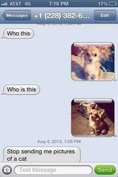 The Cat? Approach: | 26 Absolutely Perfect Ways To Respond To A Wrong Number Text