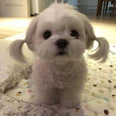Super Cute Puppies, Baby Animals Super Cute, Cute Baby Dogs, Cute Little Puppies, Cute Funny Dogs, Cute Dogs And Puppies, Cute Little Animals, Cute Funny Animals, Doggies