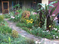 Pictures From The Garden Florida Gardening Forum Gardenweb