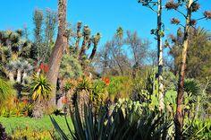 Huntington Botanical Gardens in San Marino, California