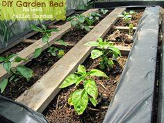 Pallet vegetable garden