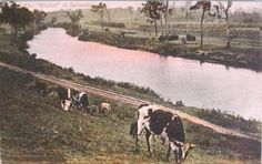 Bairnsdale Mitchell River, Australia (my town)