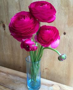 Beautiful hot pink ranunculus!!