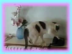 Cat answers phone. Who's there? Meow.. meow! More @ cutiesnfuzzies.com