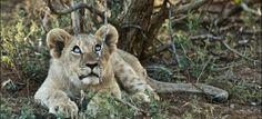 Tuningi Lodge - Game-rich country with Big Five (black & white rhino, elephant, lion, buffalo and leopard) cheetah, wild dog, kudu, springbok, eland, red hartebeest, giraffe and impala, A paradise for bird watchers.