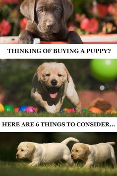 6 things to consider before you get a puppy