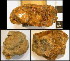 Piezas de ámbar opaco provenientes de yacimientos paleontológicos del Cretácico Medio ubicados en Charentes, Francia