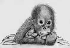 pencil drawing of a baby gorilla - Yahoo Search Results Yahoo Image Search…