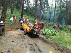 Deep forest challenge