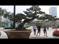 Cây Thông Dáng xiêu củaTạ Huỳnh đẹp và ý nghĩa Bonsai Art, Street View, World, Youtube, The World, Youtubers, Youtube Movies