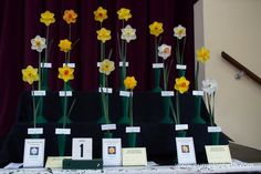 The Daffodil Collections were much admired by the visitors to The Daffodil Society Mid Southern Group Spring Show at Cobham. Plant Labels, Different Plants, The Visitors, Daffodils, Yellow Flowers, Southern, Pumpkin, Group, Collections