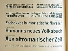 Schelter & Giesecke type specimen