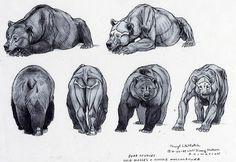 Bear anatomy reference