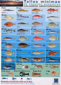 Nueva mirada al mar: En tus manos esta el futuro del mar y de la pesca