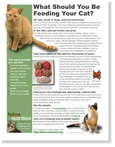 What Should You Be Feeding Your Cat? RAW. One Page Guides in Feline Nutrition