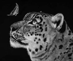 Scratchboard was developed in nineteenth century England and France, where printers were looking for new ways to reproduce illustrations. Wood, metal and linoleum engraving all had their faults, and scratchboard seemed to be the perfect solution. Scratchboard Art, Clouded Leopard, Value In Art, Scratch Art, Drawings Of Friends, Environmental Art, Recycled Art, Snow Leopard, Art Plastique