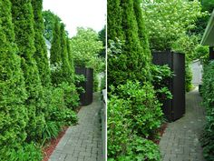 ideas for that narrow space in between suburban homes, flowers, gardening, hydrangea, landscapes