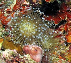 Corali din Insula Romblon