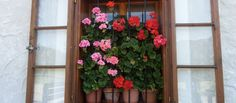 Austtattung Winter, Plants, Summer, Winter Time, Flora, Plant, Winter Fashion, Planting