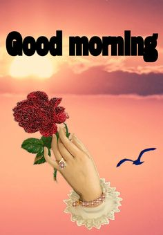 Good Morning Friday, Happy Morning, Good Morning Good Night, Good Day, Morning Qoutes, Morning Greetings Quotes, Good Morning Messages, Morning Pictures, Good Morning Images