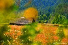 Tihuţa Pass is a high mountain pass in the Romanian Bârgău Mountains (Eastern Carpathian Mountains) connecting Bistriţa (Transilvania) with Vatra Dornei (Bucovina, Moldova). Carpathian Mountains, Mountain Pass, Moldova, Romania, Landscapes, Portrait, Awesome, Pictures, Photography
