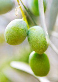 modifikasi tanaman langka