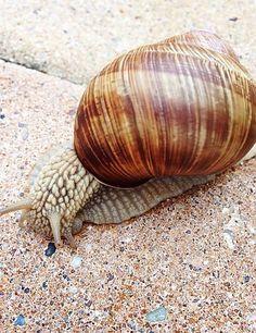 Śluz ślimaka | Golden Spa