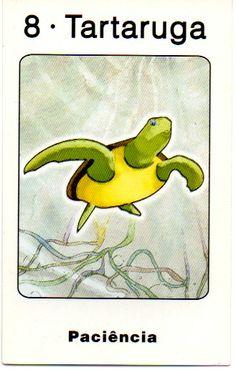 Tartaruga - Yin - Paciência
