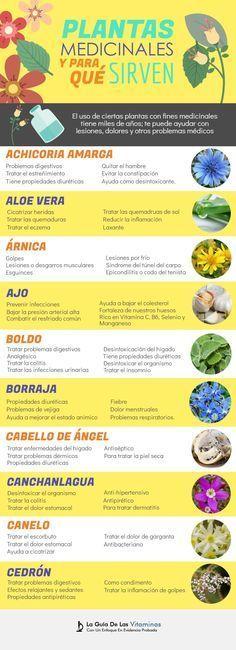 Las plantas medicinales se han usado durante siglos, algunas con mayor o menor éxito. En general, si están bien indicadas funcionan muy bien