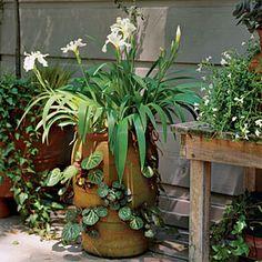 82 Creative Container Gardens | Irises & Begonias | SouthernLiving.com
