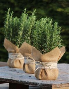 Wedding Favors Our Wedding Wedding Gifts Wedding Decorations Baby Shower Fav Herb Centerpieces, Wedding Centerpieces, Wedding Favors, Our Wedding, Wedding Gifts, Wedding Decorations, Garden Decorations, Wedding Venues, House Plants Decor