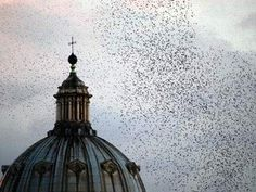 To see the starlings swarm at dusk in Rome's wintery sky~