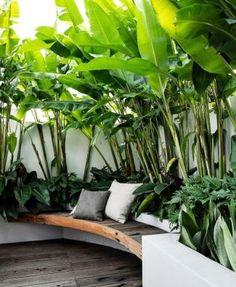 Tropical Backyard Landscaping, Tropical Garden Design, Backyard Garden Design, Tropical Patio, Bali Garden, Balinese Garden, Tropical Gardens, Small Gardens, Outdoor Gardens