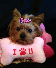 I Paw U--- love me some yorkies!!