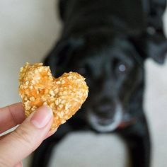 Quick and easy four-ingredient treats for dogs and horses.