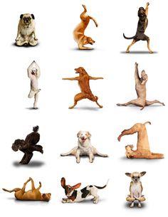 Ejercicios de #yoga para tu perro, ¡que ellos también se estresan! #mascotas #humor #perros #relax #animales