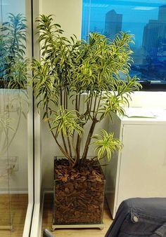 Bora encher a casa de #plantas e melhorar a #saúde da família ?