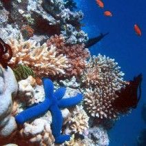Top 5 places to go Scuba-diving in January. Awesome!