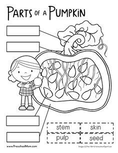 Label Parts Of A Pumpkin Best Of Pumpkin Preschool Printables Preschool Mom Fall Preschool Activities, Kindergarten Science, Free Preschool, Preschool Printables, Preschool Lessons, Kindergarten Worksheets, Classroom Activities, Writing Activities, Classroom Ideas