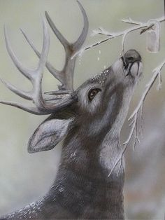 """Attraction"""" by Robin J. Myers - This painting is sold. For more artwork, . """"Fatal Attraction"""" by Robin J. Myers - This painting is sold. For more artwork, . """"Fatal Attraction"""" by Robin J. Myers - This painting is sold. For more artwork, . Wildlife Paintings, Wildlife Art, Animal Paintings, Animal Drawings, Art Drawings, Hunting Drawings, Deer Paintings, Horse Drawings, Deer Drawing"""