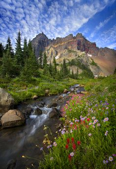 An array of beautiful nature one Summer morning in the Cascades range