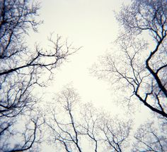 Wintertime With Lomography