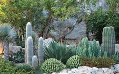 Cacti and blue-leafed tree yuccas, Majorca