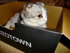 箱の中のなつ